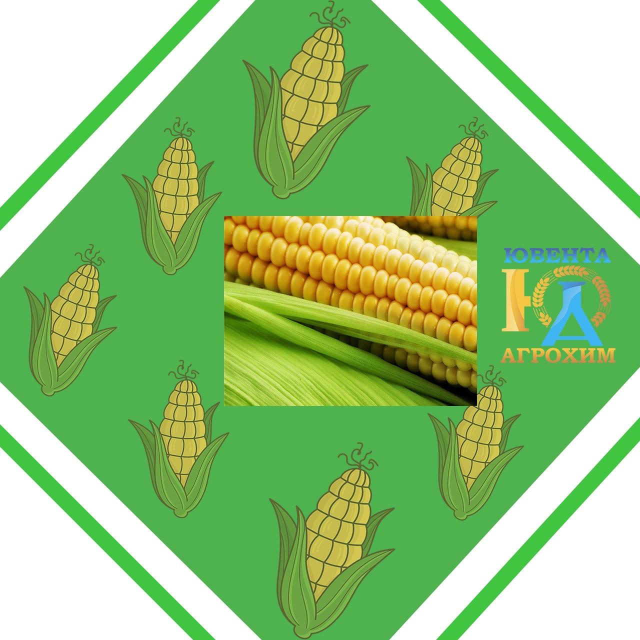 Семена кукурузы НК Перформ