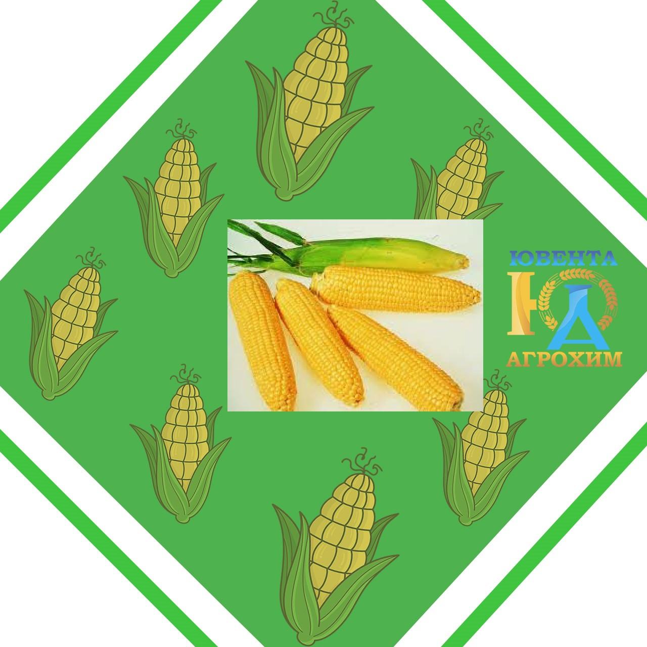 Семена кукурузы СИ Топмен