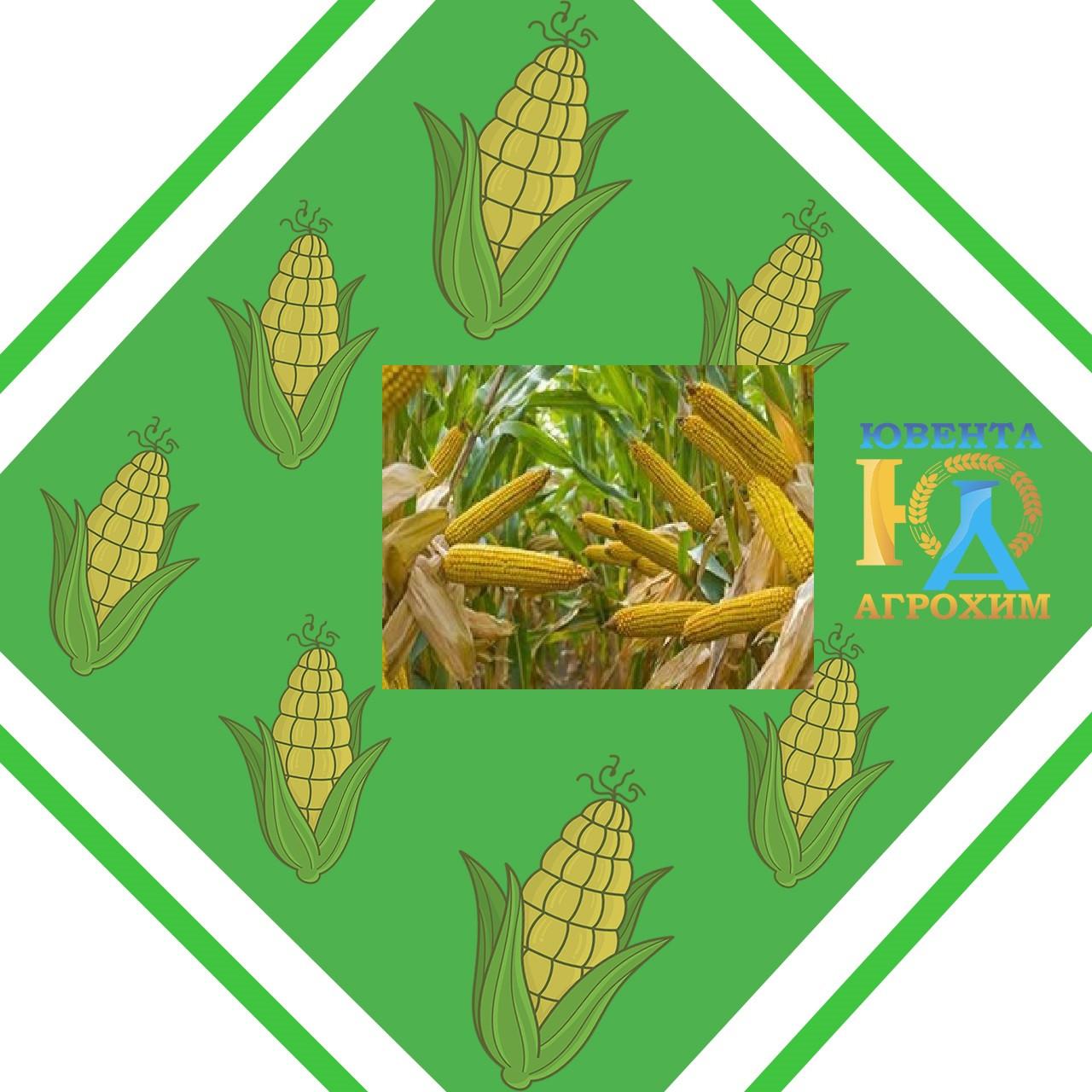 Семена кукурузы Си Вералия