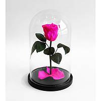 Роза в стеклянной колбе Mini 25 см (мини) малиновый радолит Persona