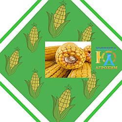 Семена кукурузы Алабама
