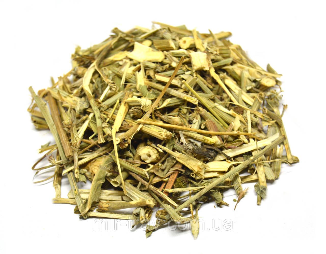 Цикорий обыкновенный трава