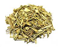 Цикорий обыкновенный трава, фото 1