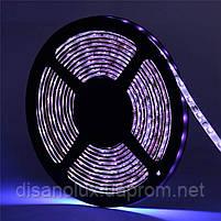 Светодиодная LED лента UV 2835 60LED/м  300LED 4,8W/м ультрафиолет 12V IP20, фото 3