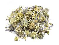 Синеголовник плосколистный трава, фото 1