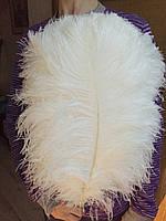 Перья страуса 55-60см.