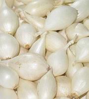 Лук озимый севок голландия Гледстоун белая 10кг
