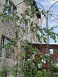 Опора шпалера для растений, фото 4