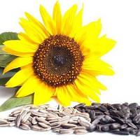 Технологічна схема вирощування і зберігання соняшнику