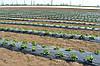Купить Агроволокно. Плотность 17г/кв.м. 3,2 м*100 м белое
