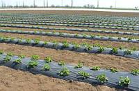 Купить Агроволокно. Плотность 17г/кв.м. 4,2 м*100 м белое