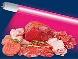 Лампы для подсветки мясных витрин,  лампы розового цвета, рыба мясо, фото 2