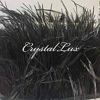 Страусина пір'яна тасьма 15-18см Black 1м