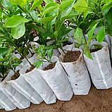 Мішечки для розсади тканинні, різні розміри, фото 2
