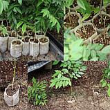 Мішечки для розсади тканинні, різні розміри, фото 8