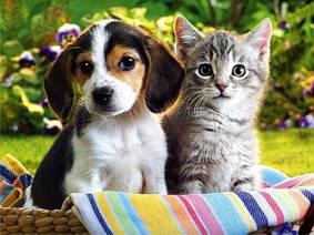 Все для кошек и собак