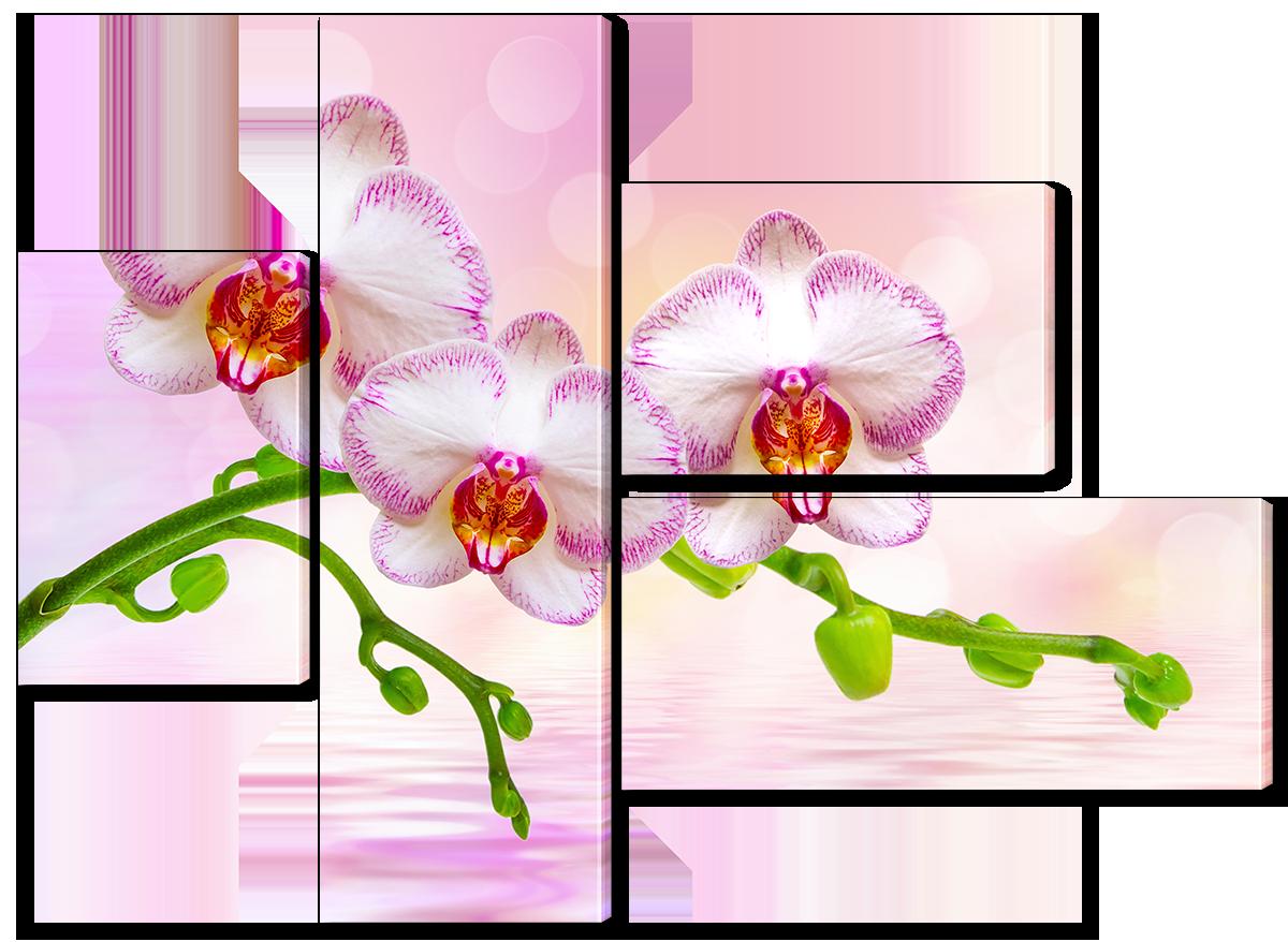 Модульная картина Interno Эко кожа Три орхидеи на розовом 173x125см (A1170XL)