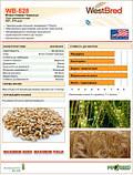 Пшениця озима  WB-528(1 репродукція), фото 2