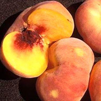 Саженцы Персика Свит Багел (Sweet Bagel) - инжирный, поздний, крупноплодный