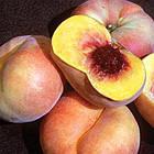 Саженцы Персика Свит Багел (Sweet Bagel) - инжирный, поздний, крупноплодный, фото 2