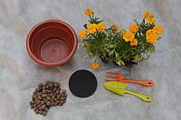 Горшечные растения. Дренажный фильтр для горшечных растений