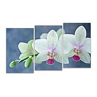 Разделенная модульная картина для декора дома IdeaХ Цветки орхидеи, 90х60 см