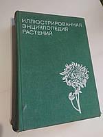Иллюстрированная энциклопедия растений Ф.Новак