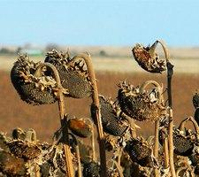 Десиканты для растений