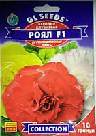 Бегония Рояль F1 смесь растения высотой 30-35 см обильноцветущие, упаковка 10 гранул