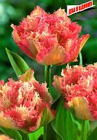 Тюльпан махровый Cool Crystal, луковица
