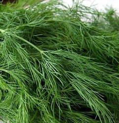 Кріп Грін Слівс / Green Sleeves Enza Zaden, 250 грам