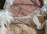 Озимый чеснок для посадки Сорт Прометей семена(воздушка) 0.5 кг, фото 4