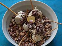 Озимый чеснок для посадки Сорт Прометей семена(воздушка) 100 гр