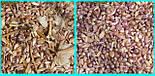"""Чеснок на посадку сорт  """"Лидер""""- семена """"воздушка"""" кг, фото 3"""
