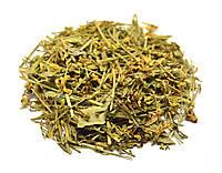Дрок красильный трава, фото 1
