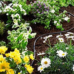 Капельный полив цветов и растений