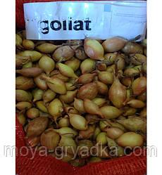 Озима цибуля Голіат , кг