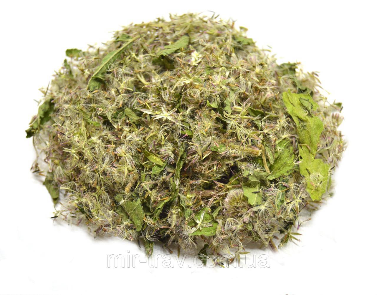 Посконник пурпурный трава