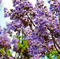 Семена декоративных и красивоцветущих