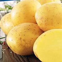 Картофель семенной Саванна Элита 1-й репродукции Голландия картошка