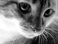 Интересные факты о кошках.