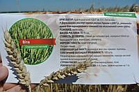 Вита - Семена пшеницы озимой от производителя Элитгосп им. Шевченко