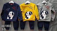 Трикотажный костюм-двойка для мальчиков Setty Koop оптом, 1-5 лет.
