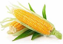 Купить Семена кукурузы Респект