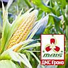 Насіння кукурудзи ДМС Гроно (МАЇС) ФАО 260