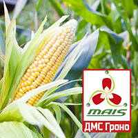 Семена кукурузы ДМС Гроно (МАИС) ФАО 260