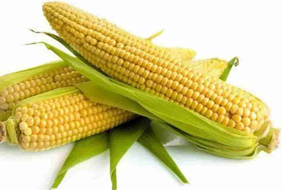 Купить Семена кукурузы Канзас