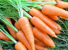 Семена моркови на развес
