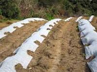 Агроволокно Агротекс 42 г/м2 белое размер 1,6х50м
