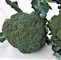 Капуста броколи КОРАТО F1 Enza Zaden, фото 1